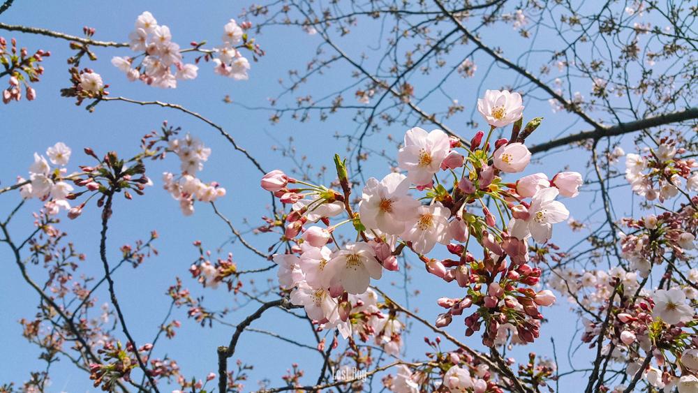 [CR] เที่ยวญี่ปุ่นคนเดียวไม่ยาก และ สนุกกว่าที่คิดนะ - Pantip