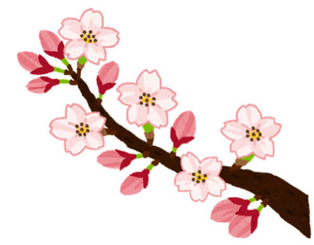 ซากุระ เพราะอะไรทุกท่านถึงปฏิพัทธ์ดอก สาเหตุที่คนญี่ปุ่นให้ความสำคัญกับการชม