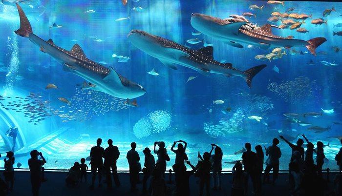 เหิรฟ้าไปเที่ยวทัวร์ญี่ปุ่นในโอซาก้า ณ Osaka Aquarium KAIYUKAN พิพิธภัณฑ์สัตว์น้ำไคยูคัง