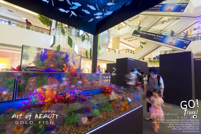 art of aqua life
