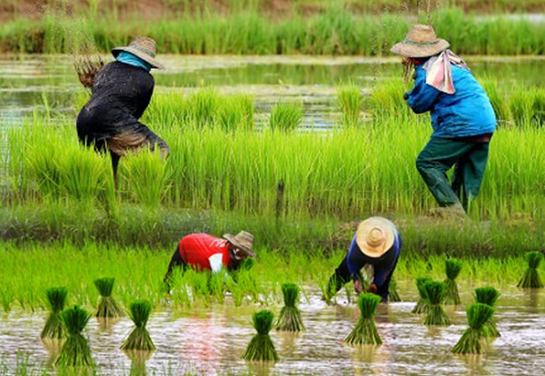 ผลการค้นหารูปภาพสำหรับ เกษตรกรรม