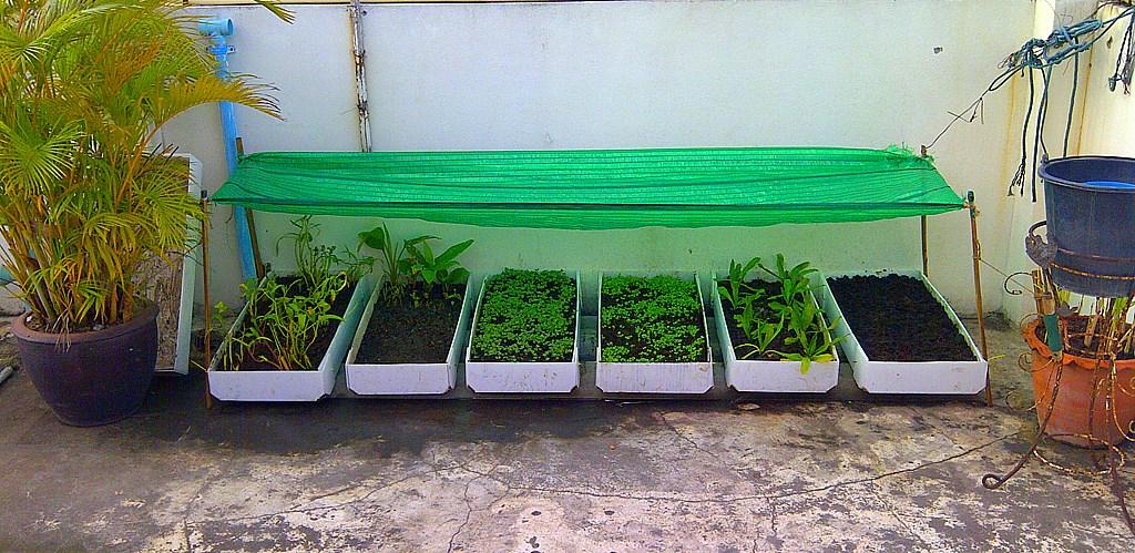 D.I.Y. ขวดพลาสิก : ปลูกผัก จัดสวนในขวดน้ำพลาสติก -
