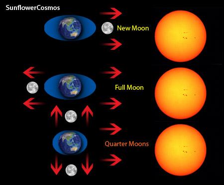 ซึ่งนอกจากน้ำบนผิวโลกแล้ว ดวงจันทร์ยังมีผลีต่อน้ำในร่างกายมนุษย์ กล่าวคือ  มีผลต่อเลือดและของเหลวในสมอง [Spoil] ...