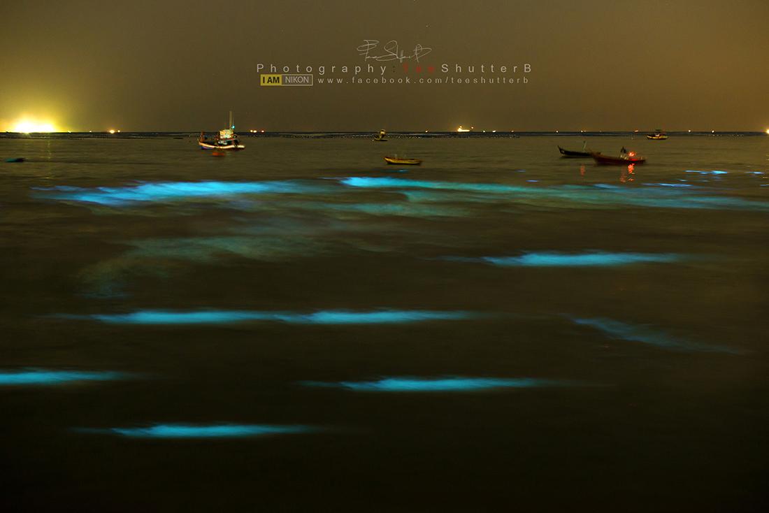 """[CR]ชวนไปดู """"ทะเลเรืองแสง"""" @ หาดบางแสน พลาดครั้งนี้ไม่รู้จะมีอีกเมื่อไหร่"""