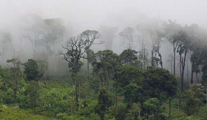 ผลการค้นหารูปภาพสำหรับ ป่าเขานเรศวร