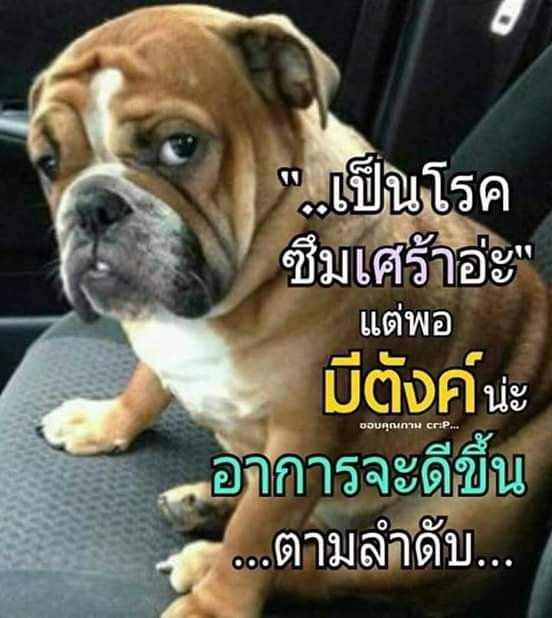 [Image: ptc4hkr6xMYm0LProEB-o.jpg]