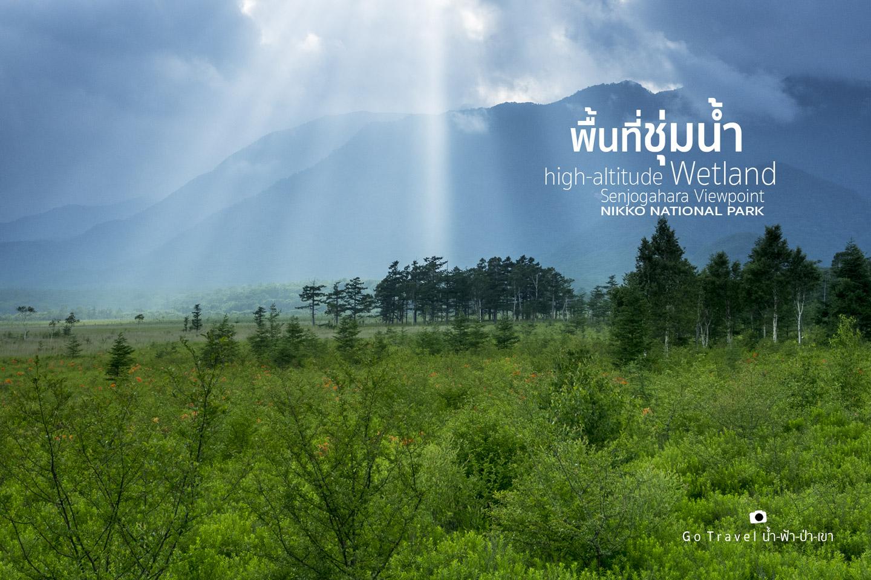 wetland nikko