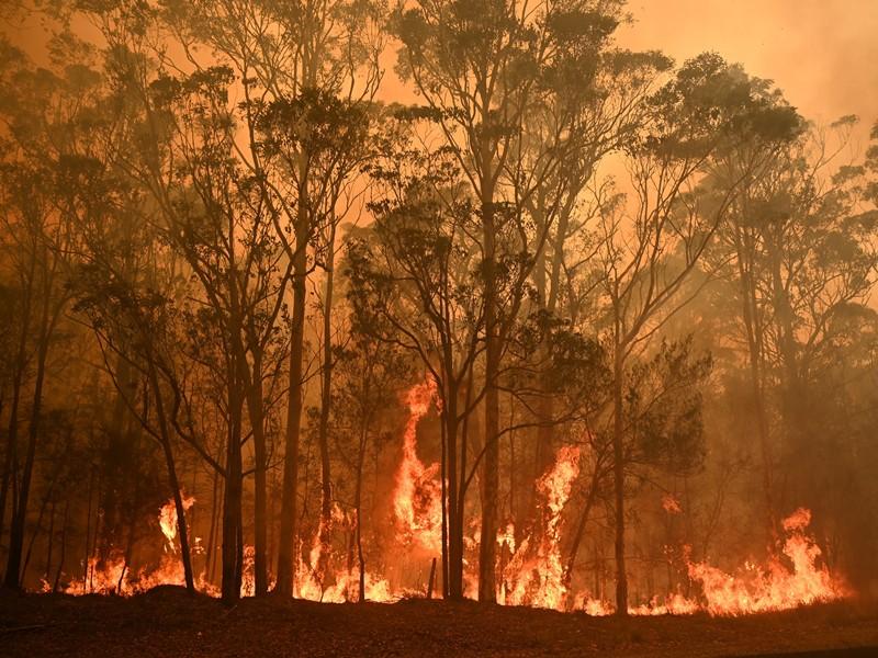 ไฟป่าในออสเตรเลีย มหันตภัยไร้จุดจบ - Pantip