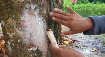 ขูดต้นไม้ - ถูกหวย ทุกหวย รวยไปกับเรา หวยออนไลน์ ถูกหวย https://tookhuay.com/