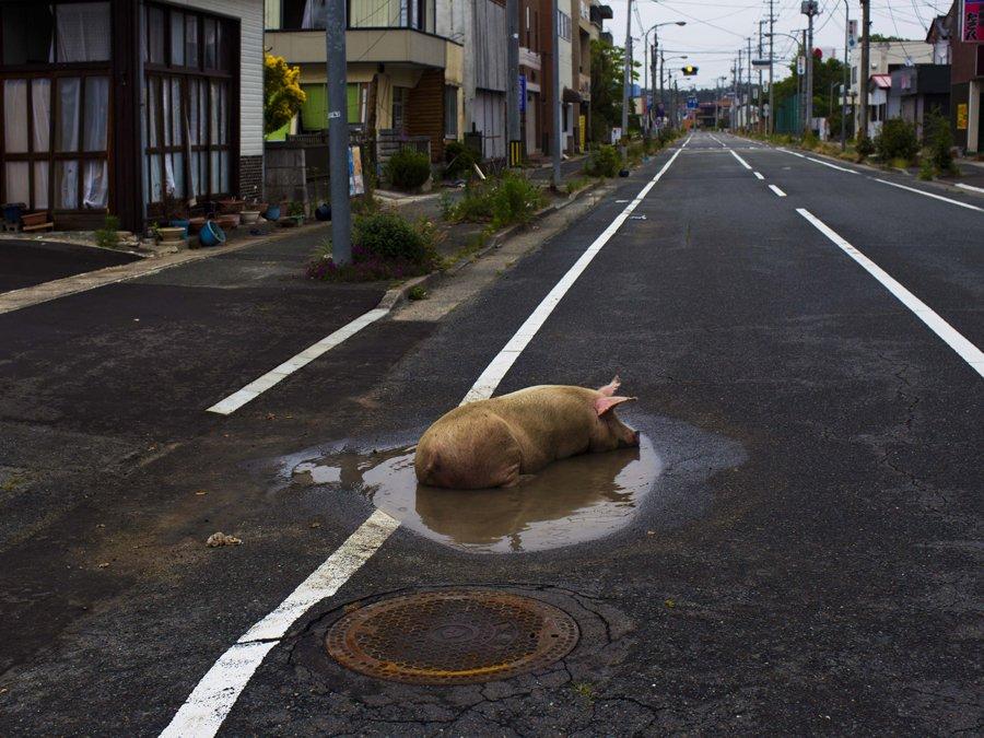 เที่ยวฟุกุชิมะ