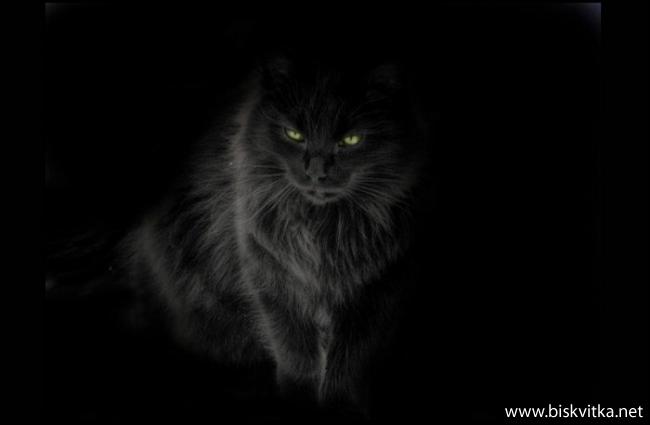 Cat Blanc Psycho Love