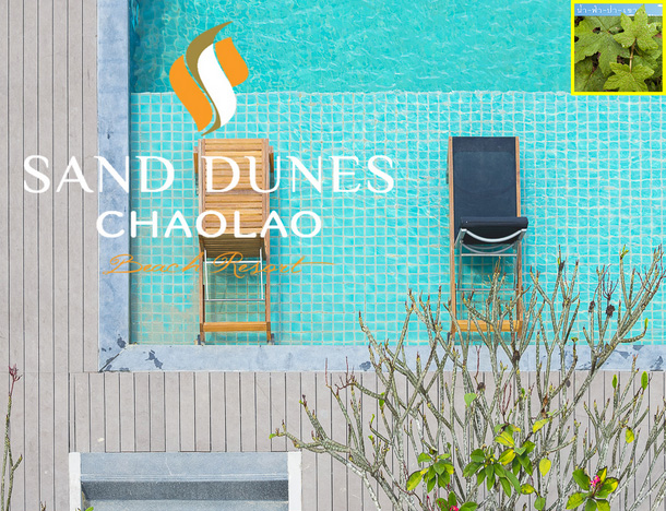 SandDunes resort