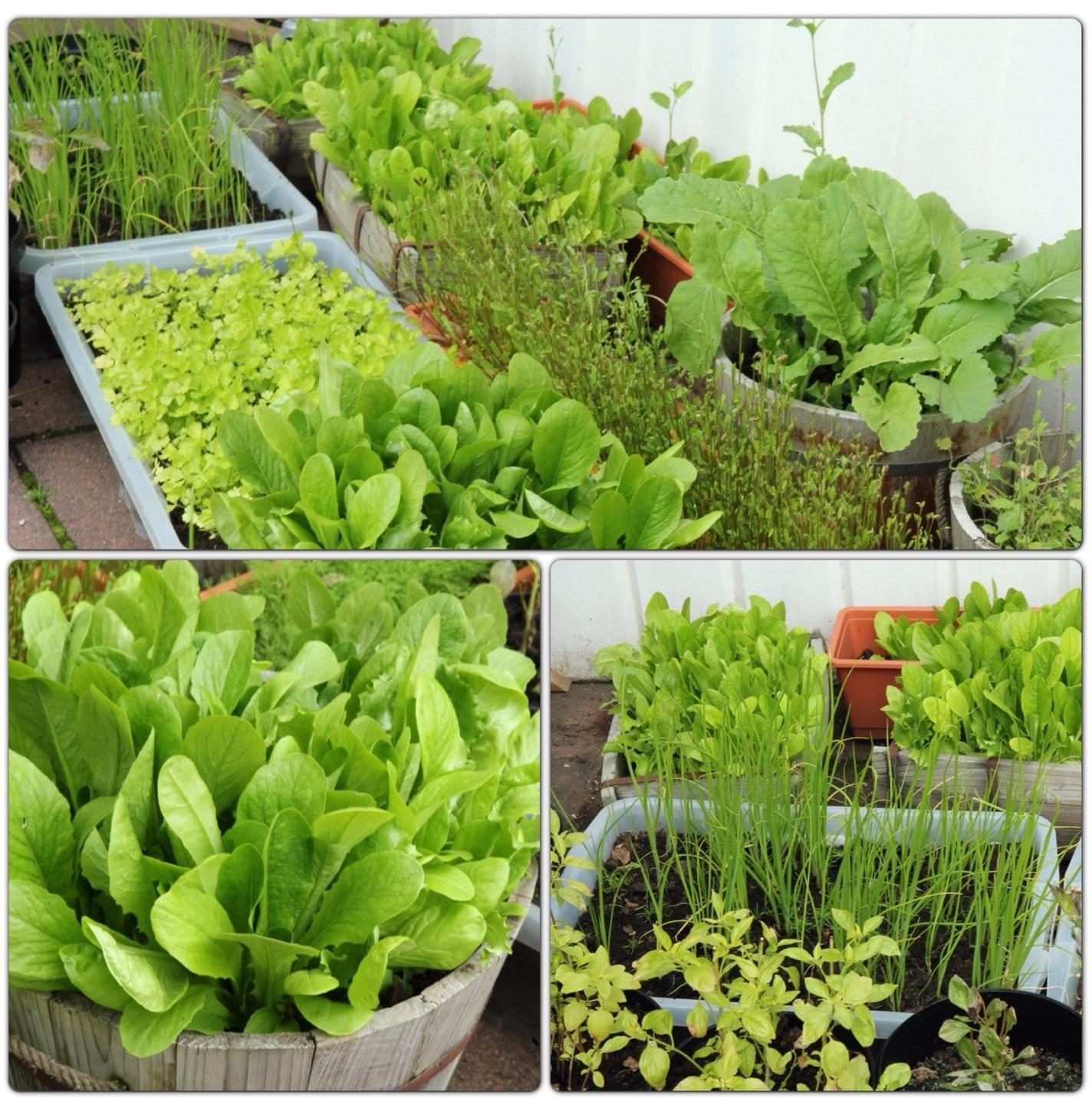 10 วิธีปลูกผักสวนครัวในกระถาง มีผักสด ๆ ไว้กินที่บ้าน