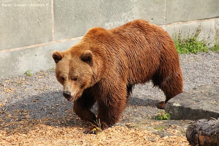 ผลการค้นหารูปภาพสำหรับ บ่อหมีสีน้ำตาลสวิตเซอร์แลนด์