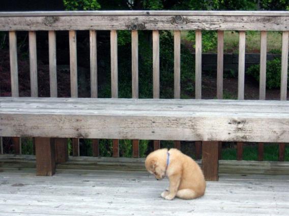 ขอบคุณรูปภาพหมาเหงาจาก http://pantip.com/topic/30568456