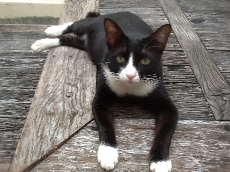 วิลาศ - แมวผู้น่ารัก