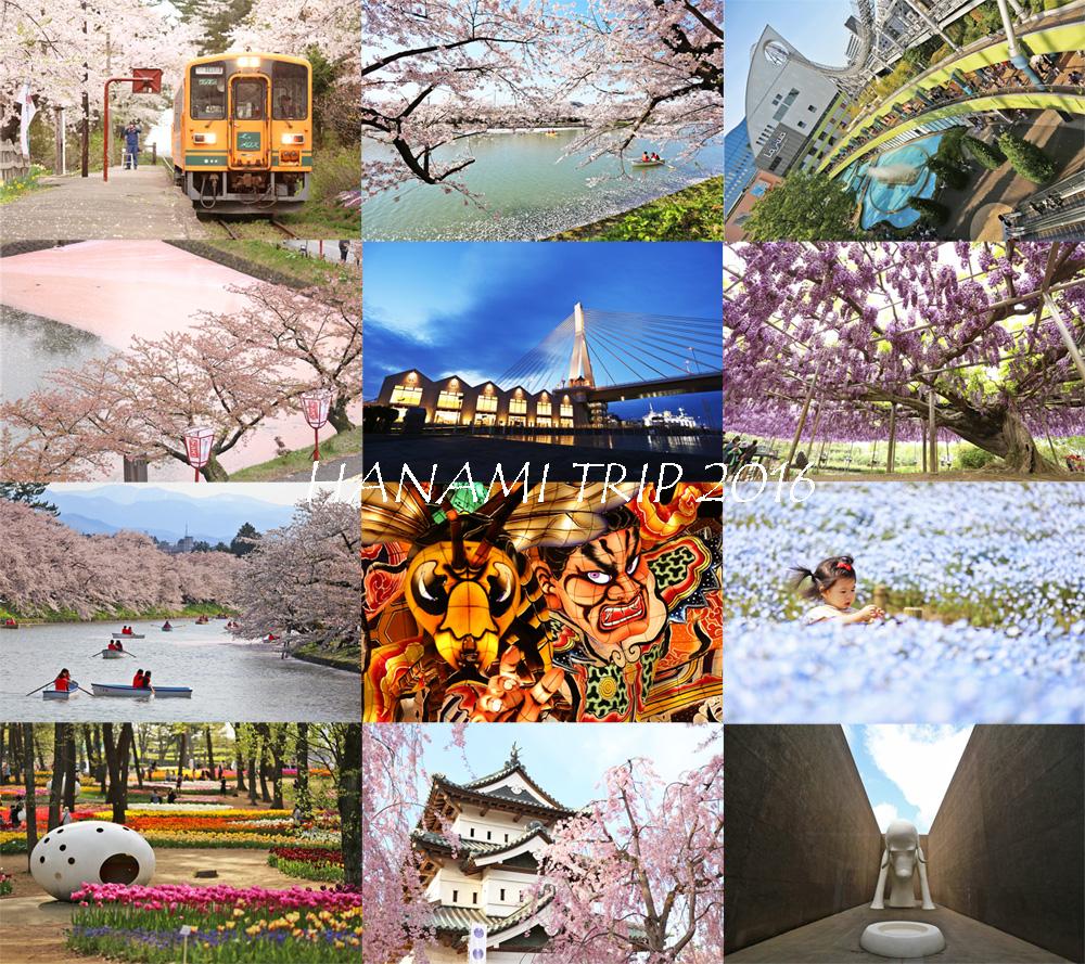 ตารางของทริปนี้ (26 เมย - 5 พค รวม 10 วัน 9 คืน) Day 1 - Hitachi seaside park. Day 2 - Hirosaki park. Day 3 - Ashino park. Day 4 - Hirosaki park & Apple ...